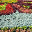 Stock Photo: Beautiful flowerbed