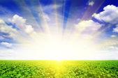 Campo de girassol e lindo amanhecer — Fotografia Stock