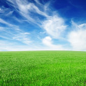 Field and the beautiful blue sky — Stock Photo