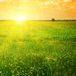 Stock Photo: Beautiful sunset on a spring field