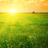 Beautiful sunset on a spring field — Stock Photo