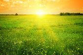 Hermosa puesta de sol en un campo de primavera — Foto de Stock