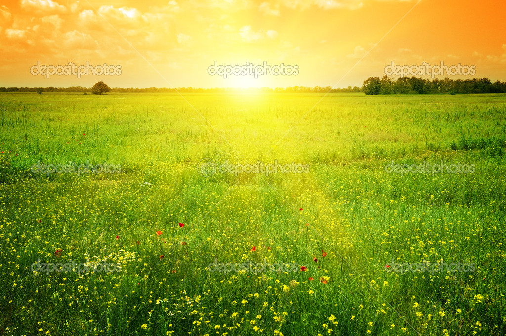 Beautiful sunset on a spring field — Stock Photo #10705866