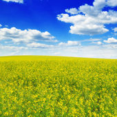 Spring field and blue sky — Stock fotografie