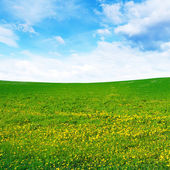 Spring field — Stock Photo