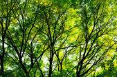 Ağaçların arasından güneş ışığı — Stok fotoğraf