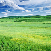 Field, mountains and blue sky — Stock Photo