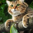 Cat on a tree branch — Stock Photo