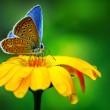 Blue butterfly — Stock Photo #9466547