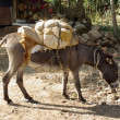 Stock Photo: Donkey in Ethiopia