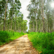 Dirt Road — Stock Photo #9133302