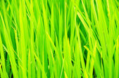 Fresh Grass Macro — Stock Photo