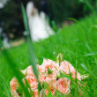 Royalty-Free Stock Photo: Wedding bouquet of roses laying in grass against enamoured pair