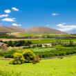 Winelands scenery — Stock Photo #10469869
