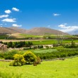 Stock Photo: winelands scenery