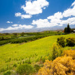 South africa winelands landscape — Stock Photo