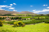 Winelands scenery — Foto Stock