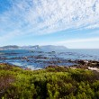 Boulders beach, Cape Town — Stock Photo #10470052