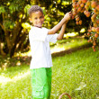 Boy pcking lychees - Stock Photo