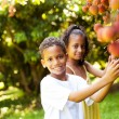 Stock Photo: Kids picking lychees