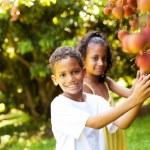 Kids picking lychees — Stock Photo