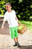 Boy carrying basket of apples — Stock Photo