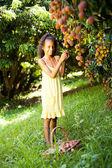 Mała dziewczynka zbieranie litchis — Zdjęcie stockowe