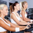 Foto Stock: Group of women cycling in gym