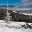 Stock Photo: Winter forest.