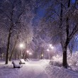 Park covered with snow at night. — Stock fotografie