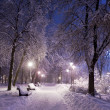 Park covered with snow at night. — Stockfoto