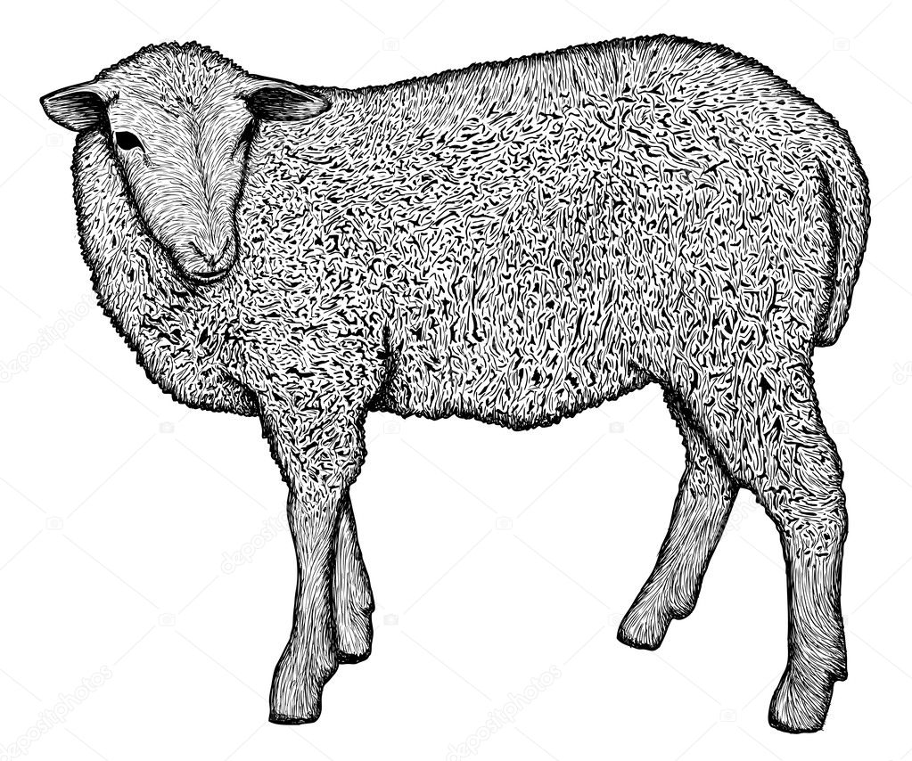 Very detailed hand drawn sheep — Stock Vector #8096095