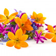 Stock Photo: Spring bouquet