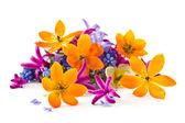 Bouquet di primavera — Foto Stock