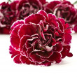 Beautiful bouquet of carnations - ストック写真