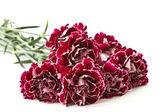 Beautiful bouquet of carnations — Stock Photo