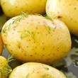 Young boiled potatoes — Stock Photo #10542969