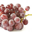 Bunch of grapes — Stock Photo #10543895