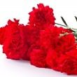 Royalty-Free Stock Photo: Red carnation