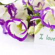 Lisianthus — Stock Photo #7975908