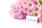 Pink chrysanthemum — Stock Photo