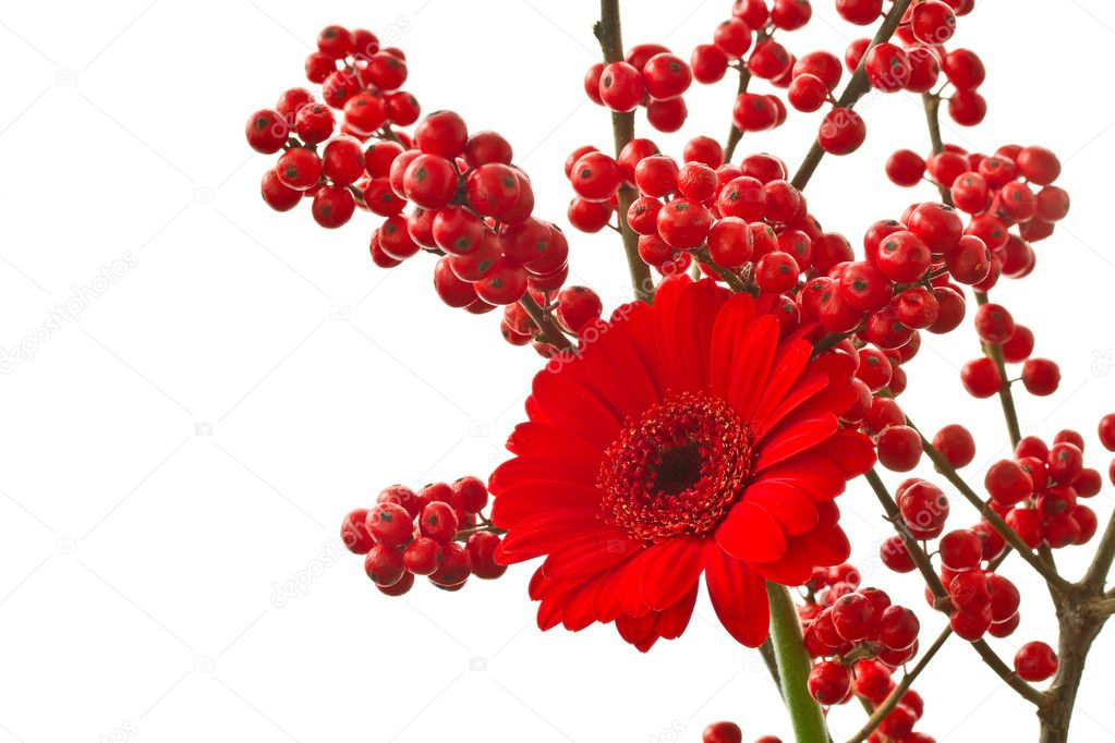 Beautiful bouquet with red Gerbera on white background  Stock Photo #8077232