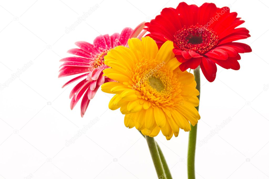 Beautiful bouquet with red Gerbera on white background — Photo #8077247