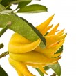 Stock Photo: Buddha's hand citron