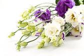 Beautiful flowers lisianthus — Stock Photo