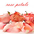 Stock Photo: Rose petals