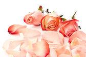 Pétales de rose — Photo