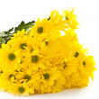 Yellow chrysanthemums — Stock Photo #9231630