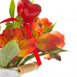 Alstroemeria - Photo