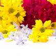 Stock Photo: Chrysanthemum flowers, hyacinth and carnation